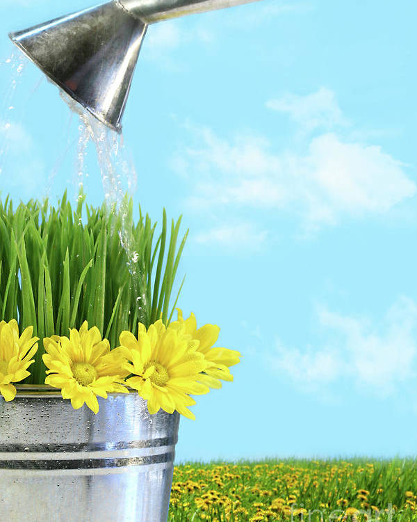 Beautiful Poster featuring the photograph Watering Flowers And Grass For Spring by Sandra Cunningham