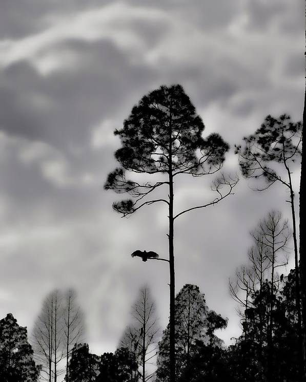 Landscapes Poster featuring the photograph When The Air Gets Too Thin by Jan Amiss Photography
