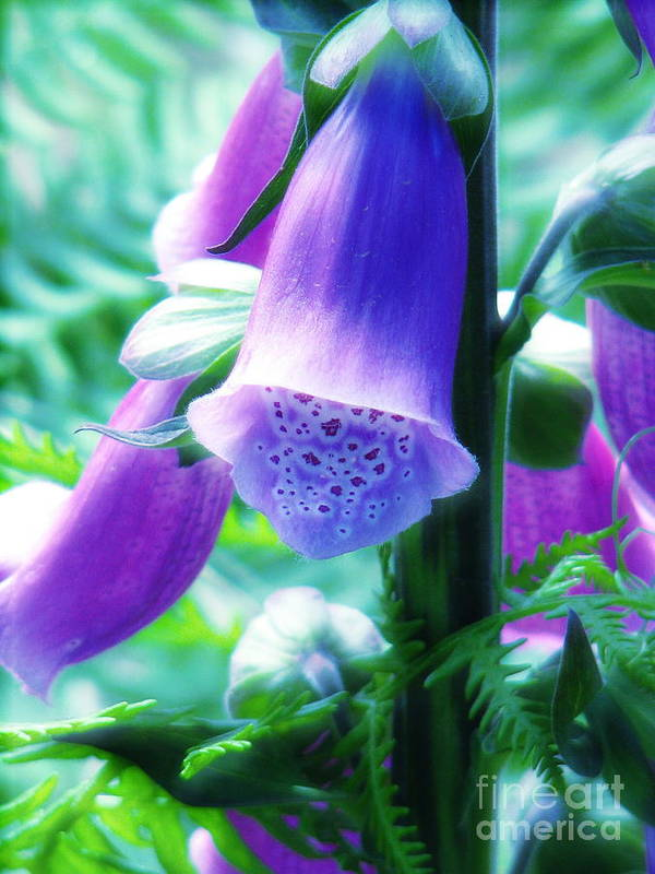 Foxglove Poster featuring the photograph Where Fairies Live by Rory Sagner