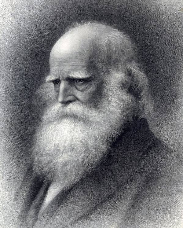 Historical Poster featuring the photograph William Cullen Bryant 1794-1878 Was An by Everett