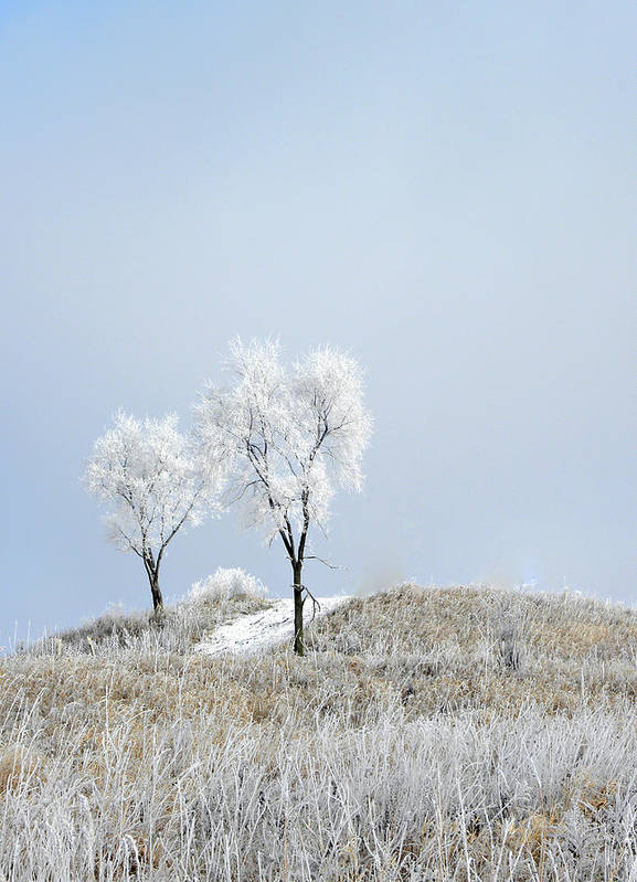 Snow Poster featuring the photograph Winter Frost by Julie Palencia