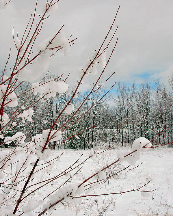 Winter Scene Poster featuring the photograph Winter Woods by Joann Vitali