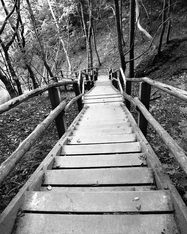 Treppe Poster featuring the photograph Wooden Stairs by Falko Follert