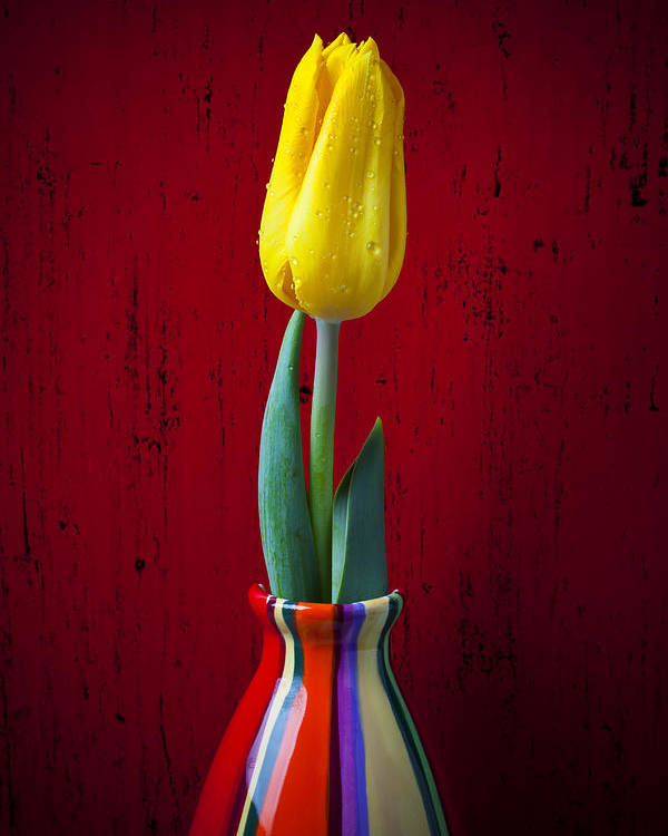 Yellow Poster featuring the photograph Yellow Tulip In Colorfdul Vase by Garry Gay
