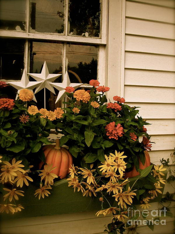 Zinnias Poster featuring the photograph Zinnias In The Window Box by Nancy Patterson