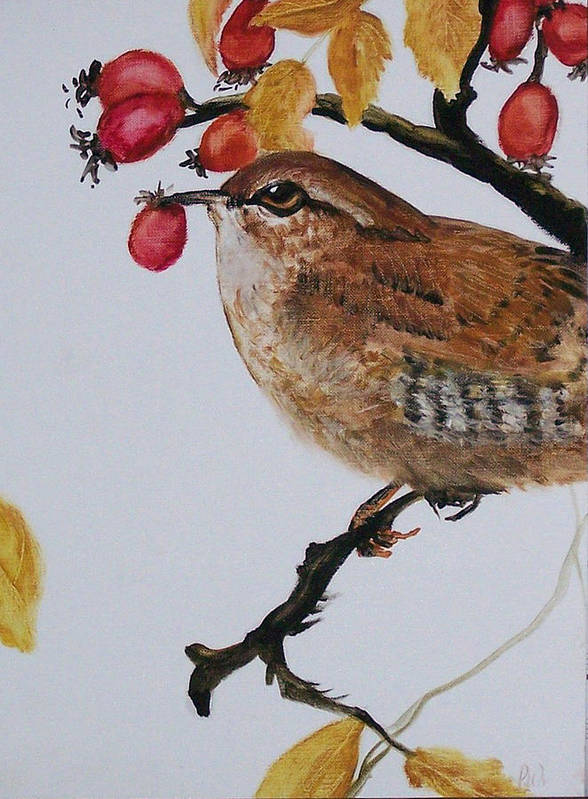 Painting Poster featuring the painting  Wren by Pamela Wilson