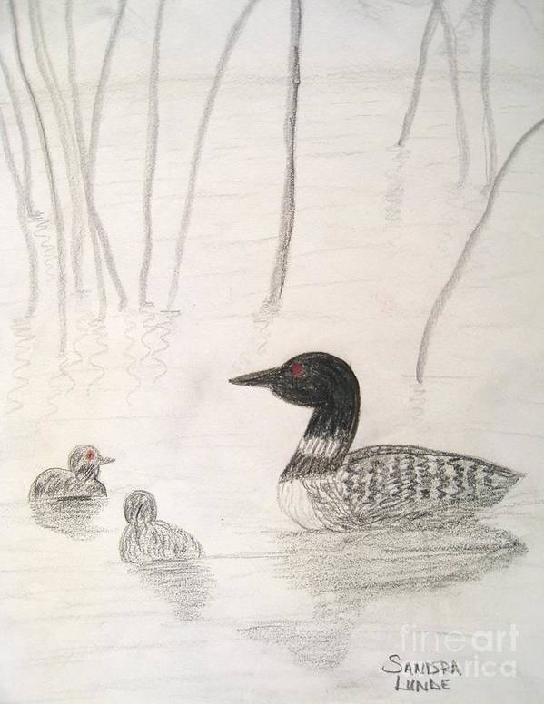 Loon Poster featuring the drawing Loon Float by Sandra Lunde