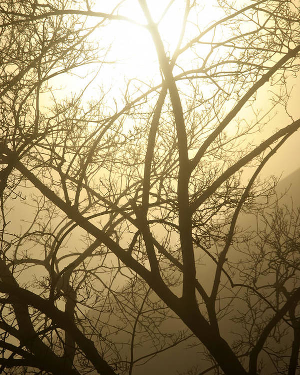 Buffalo Poster featuring the photograph 02 Foggy Sunday Sunrise by Michael Frank Jr
