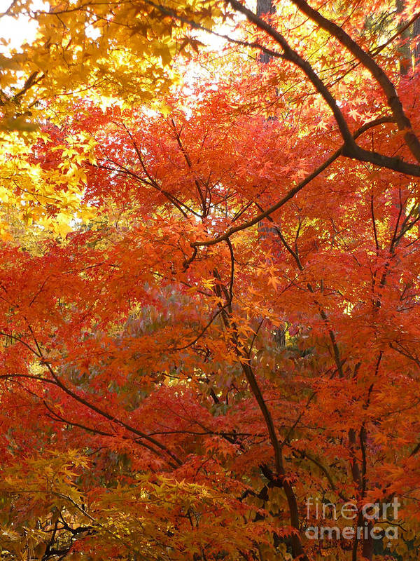 Autumn Poster featuring the photograph Autumn Gold by Carol Groenen