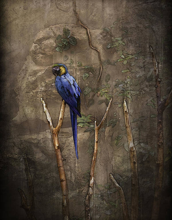 Blue And Yellow Macaw Poster featuring the photograph Blue And Yellow Macaw by Ray Van Gundy