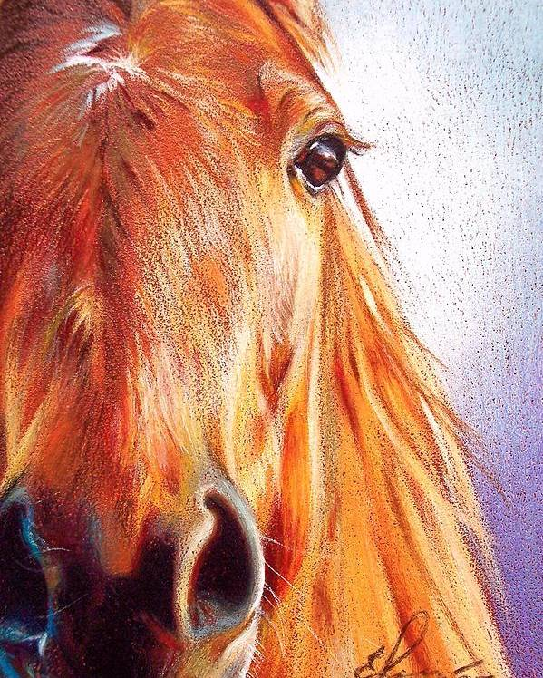 Horse Animal Art Equine Drawing Portrait Poster featuring the drawing Chestnut by Elena Kolotusha