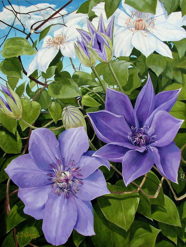 Clematis Poster featuring the painting Clematis 2 by Jerrold Carton