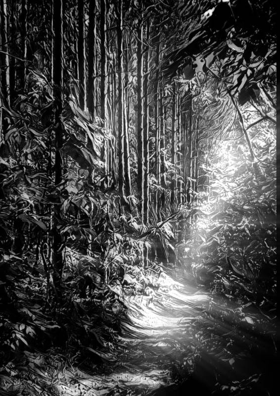 Path Poster featuring the photograph Enchanted Path by Michael Ahlrichs