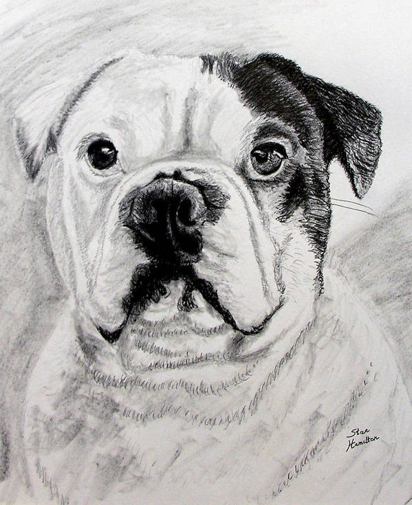 Pencil Poster featuring the drawing French Bull Dog by Stan Hamilton