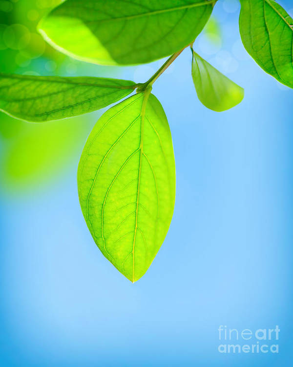 Abstract Poster featuring the photograph Fresh Green Leaves by Anna Om