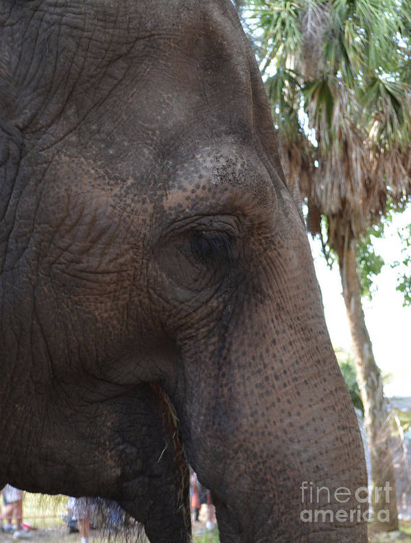 Elephant Poster featuring the photograph Gentle Giant by To-Tam Gerwe