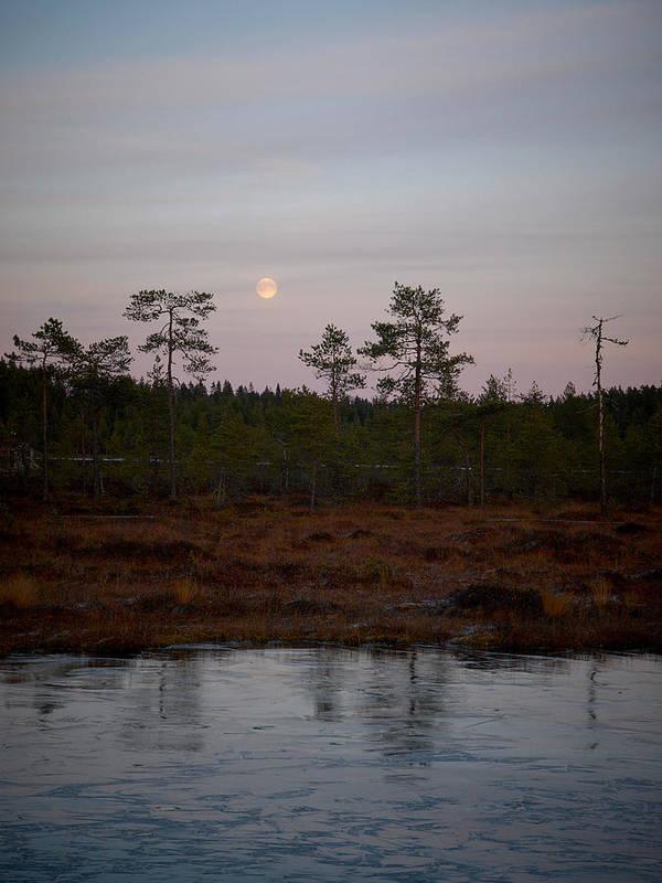 Lehtokukka Poster featuring the photograph Moon Over Wetlands by Jouko Lehto