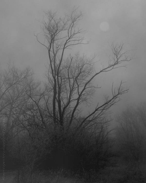 Tree Poster featuring the photograph Nebelbild 13 - Fog Image 13 by Mimulux patricia No