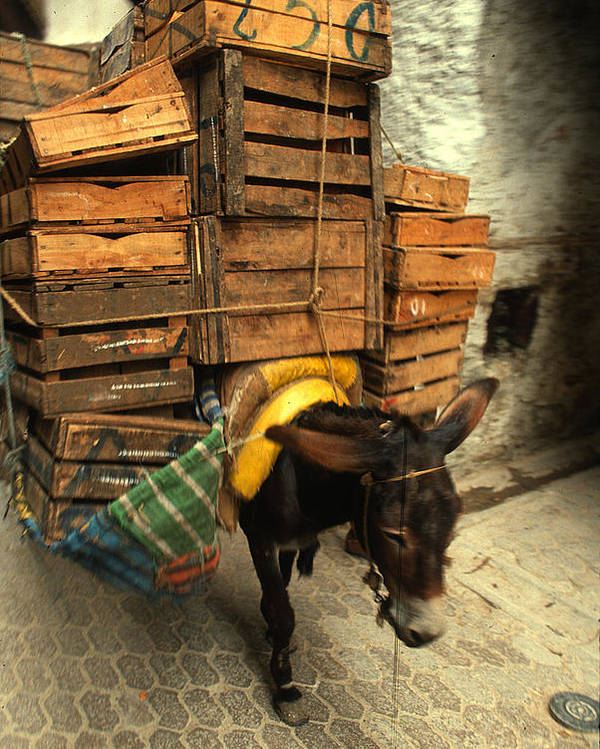 Wood Boxes Poster featuring the photograph Overloaded Donkey by Carl Purcell
