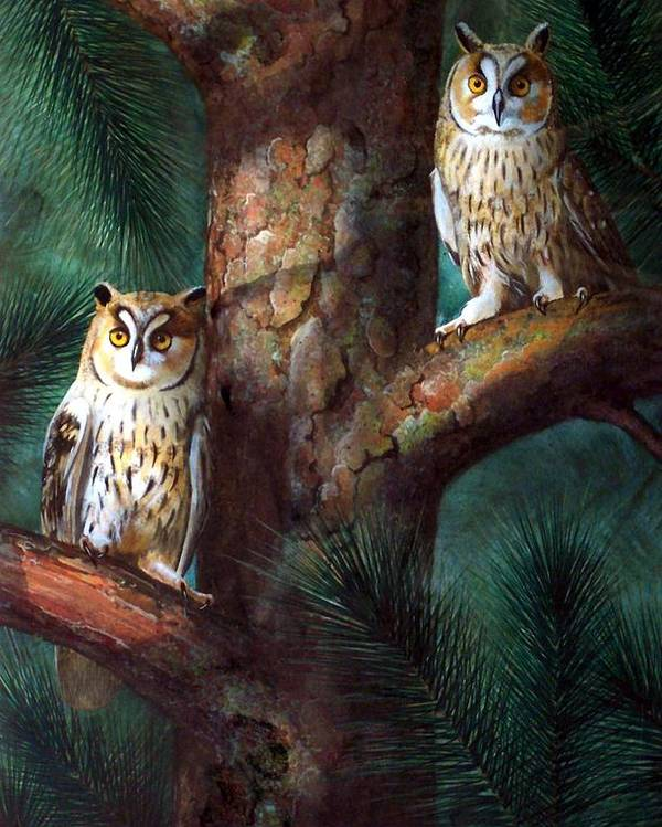 Wildlife Poster featuring the painting Owls In Moonlight by Frank Wilson