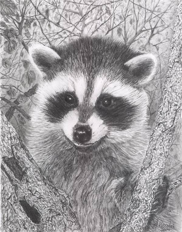 Raccoon Poster featuring the drawing Raccoon Kit by Marlene Piccolin