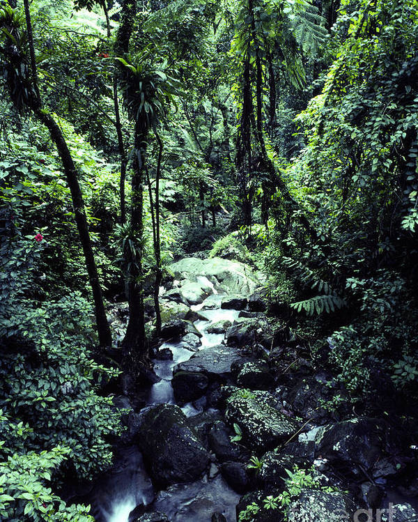 Puerto Rico Poster featuring the photograph Rushing Stream El Yunque National Forest by Thomas R Fletcher