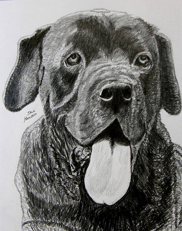 Dog Portrait Poster featuring the drawing Sampson by Stan Hamilton