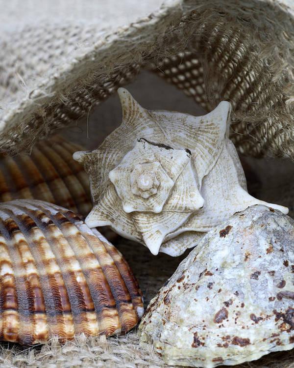 Frank Tschakert Poster featuring the photograph Seashells by Frank Tschakert