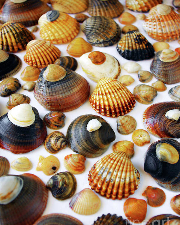 Aquatic Poster featuring the photograph Shell Background by Carlos Caetano