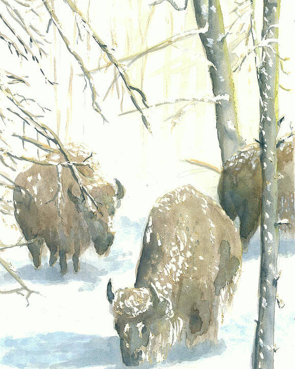 Buffalos After Snowstorm Poster featuring the painting Snow Buffs by Dan Bozich