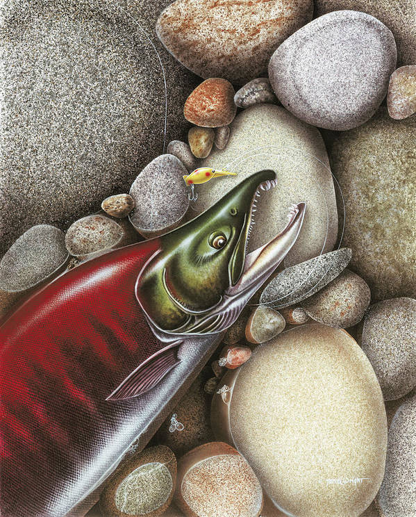 Sockeye Salmon Spawning Red Fish Fishing Alaska Rocks Stream River Angling Hot Shot Lure Tackle Poster featuring the painting Sockeye Salmon by JQ Licensing