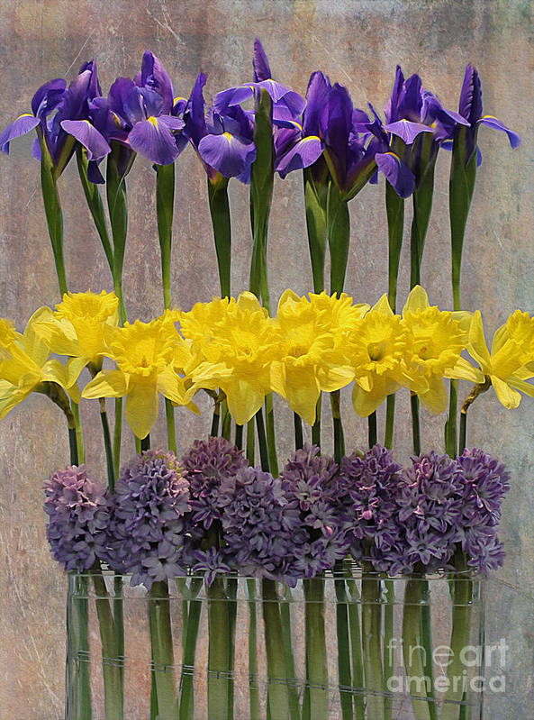 Purple Poster featuring the photograph Spring Delights by Nina Silver