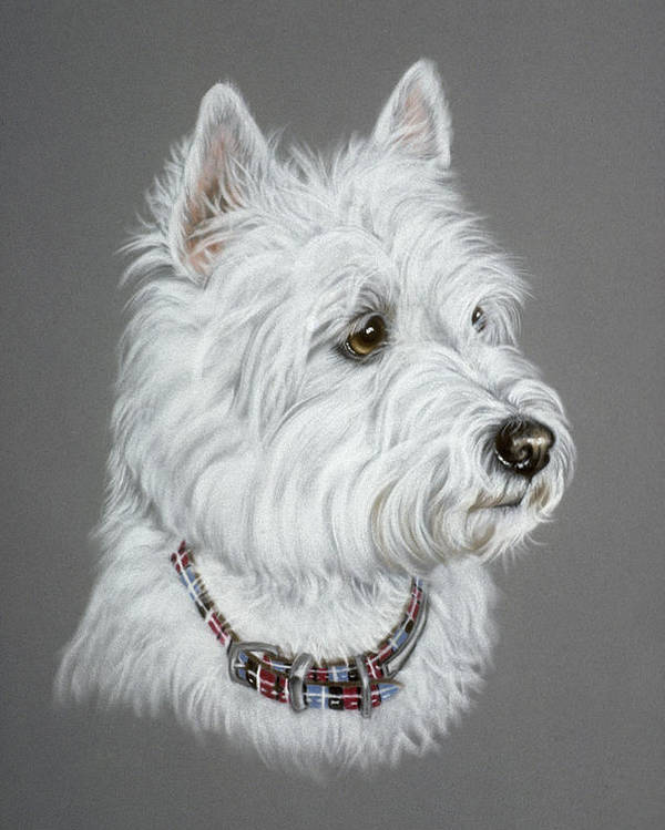 Dog Poster featuring the pastel West Highland White Terrier by Patricia Ivy