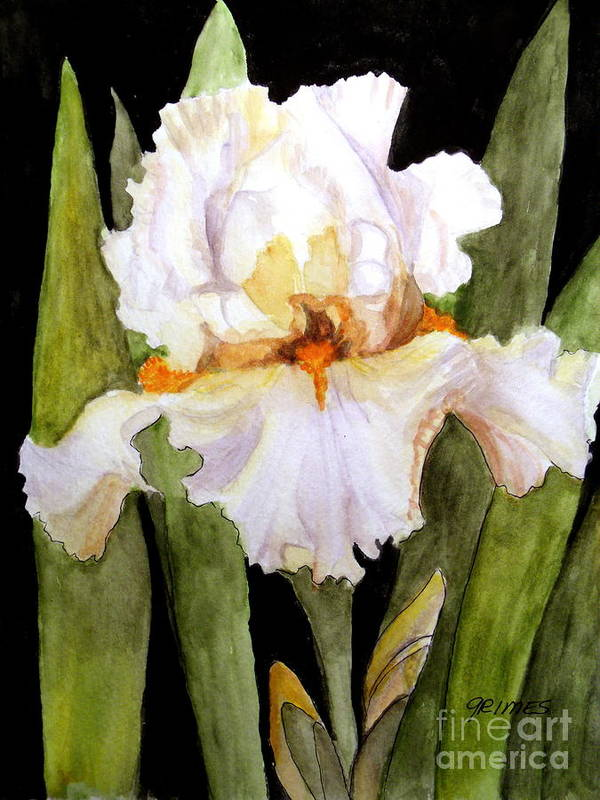 Iris Poster featuring the painting White Iris In The Garden by Carol Grimes