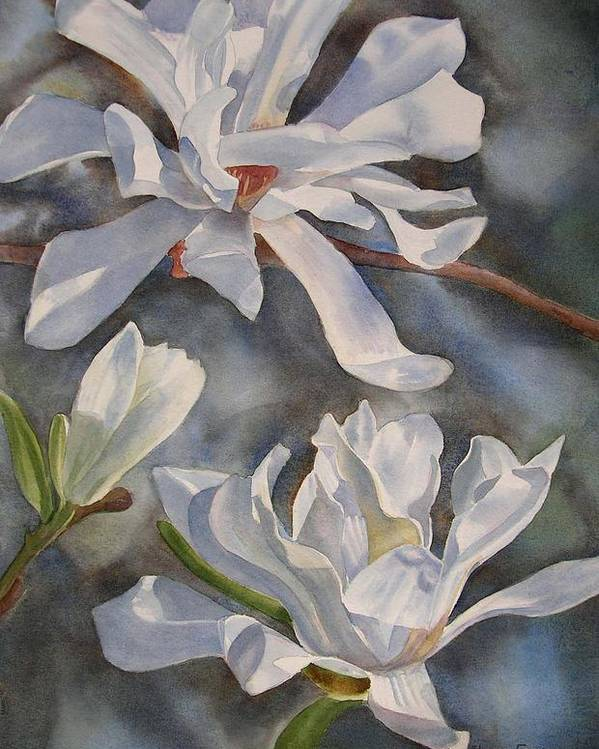 White Magnolia Poster featuring the painting White Star Magnolia Blossoms by Sharon Freeman
