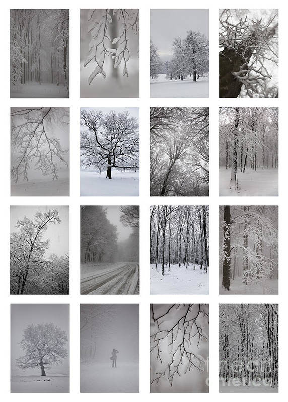Winter Poster featuring the photograph Winter Time by Gabriela Insuratelu