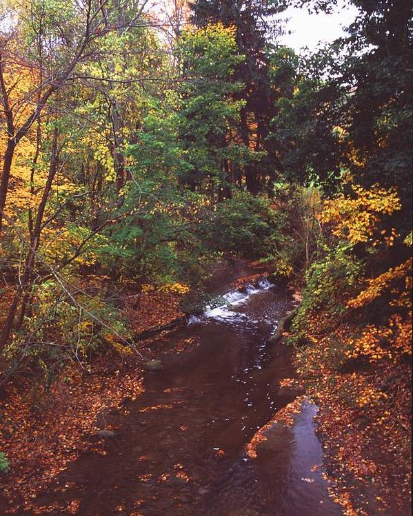 Stream Poster featuring the photograph 102701-18 by Mike Davis