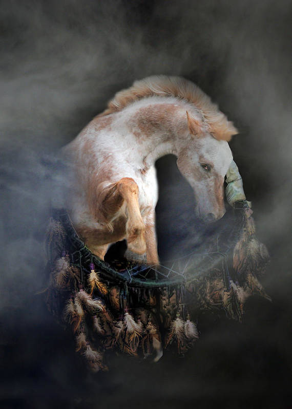 Horse Poster featuring the photograph Dream Catcher by Stephanie Laird