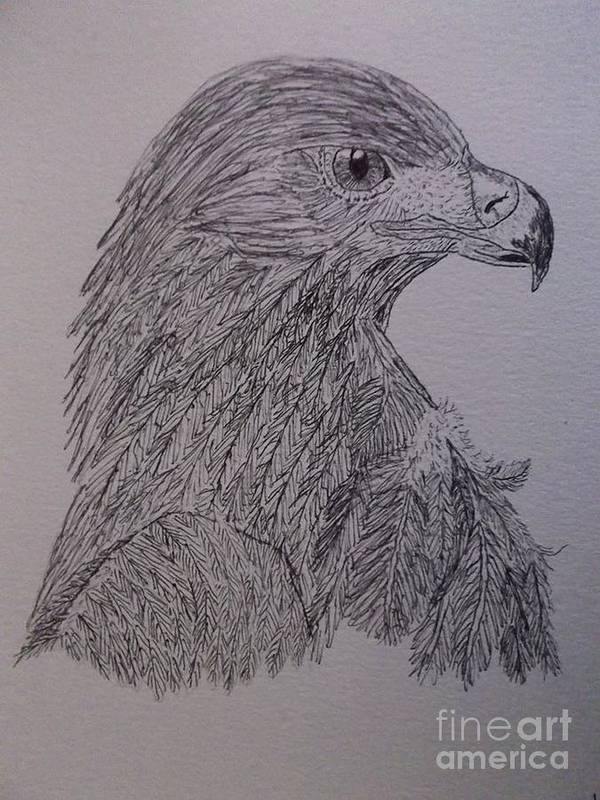 Animals Poster featuring the drawing Eagle by Sherri Gill