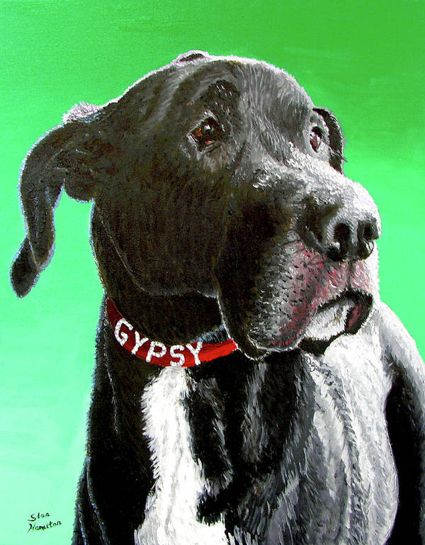 Dog Portrait Poster featuring the painting Gypsy by Stan Hamilton