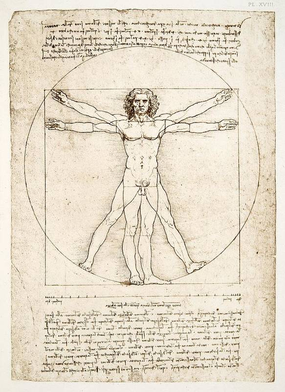 Leonardo Da Vinci Poster featuring the painting The Proportions Of The Human Figure by Leonardo Da Vinci