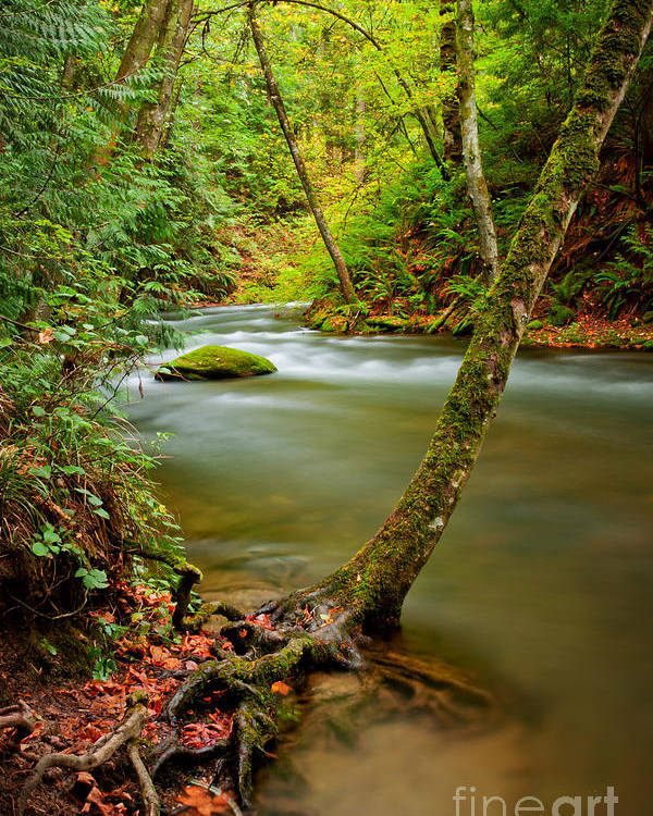 Tree Roots Poster featuring the photograph Whatcom Creek by Idaho Scenic Images Linda Lantzy