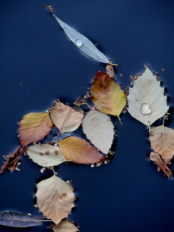 Autumn Poster featuring the photograph Autumn Leaves Abstraction by Valia Bradshaw