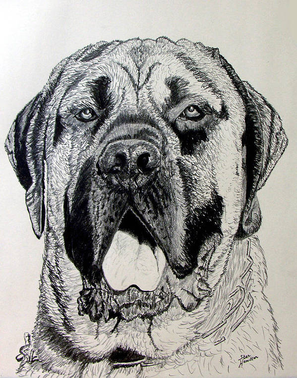 Dog Portrait Poster featuring the drawing Ely by Stan Hamilton