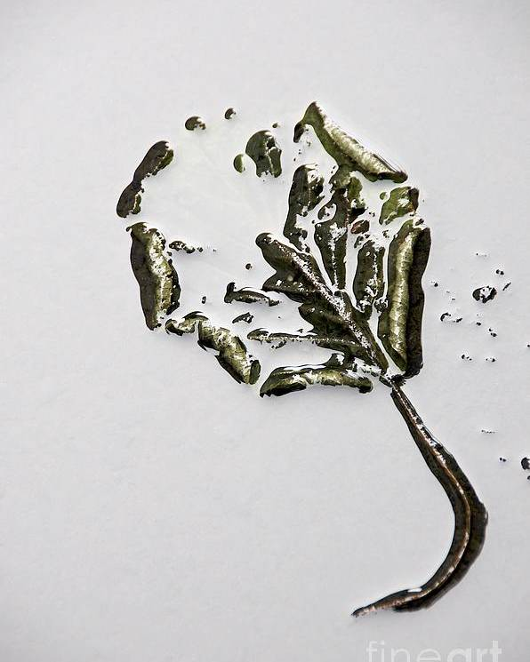 Botanical Poster featuring the photograph Leaf by Bernard Jaubert