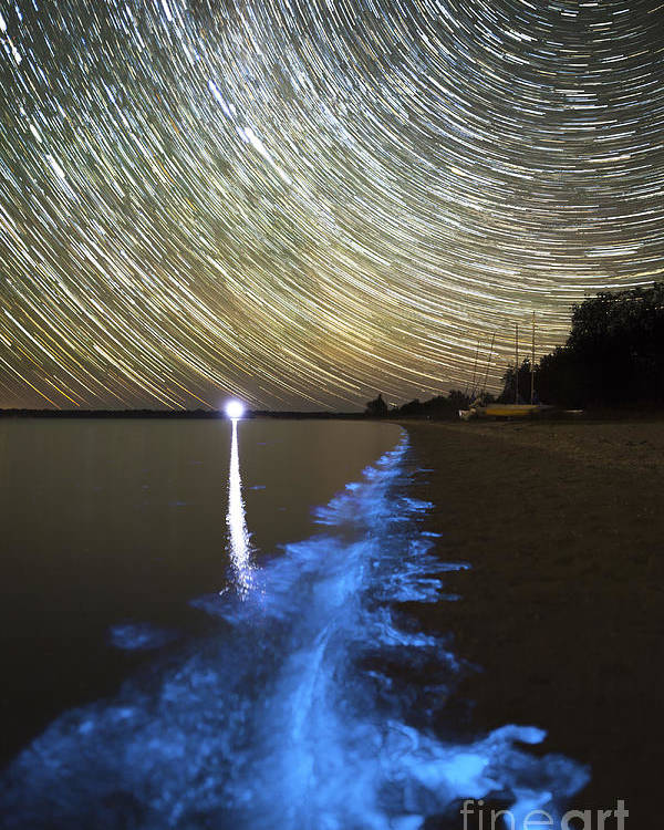 Bioluminescence Poster featuring the photograph Star Trails And Bioluminescence by Philip Hart