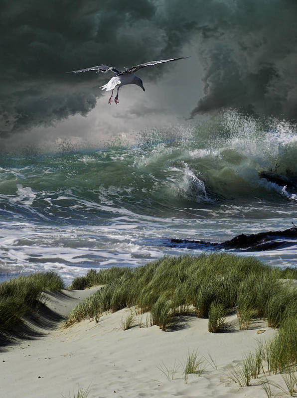 Animal Poster featuring the photograph 4135 by Peter Holme III