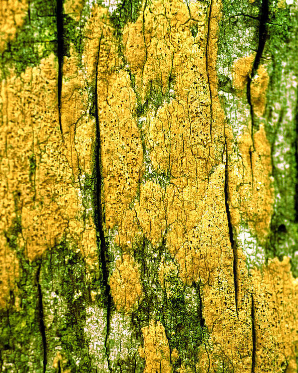 Vertical Poster featuring the photograph Tree Bark by John Foxx