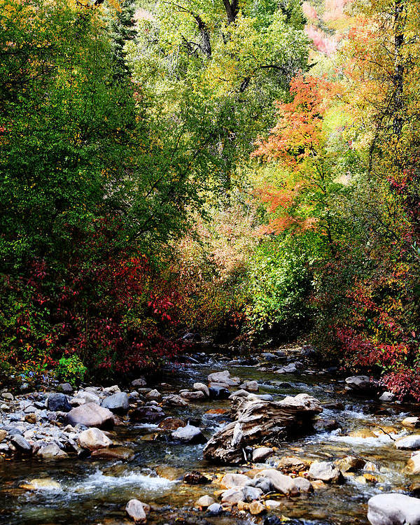 Autumn Poster featuring the photograph Rocky Mountain Fall by Mark Smith