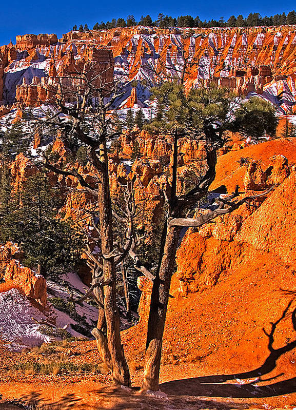 Landscape Poster featuring the photograph Bryce Canyon N.p. by Larry Gohl